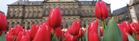 Dutch Design op Nationale Tulpendag